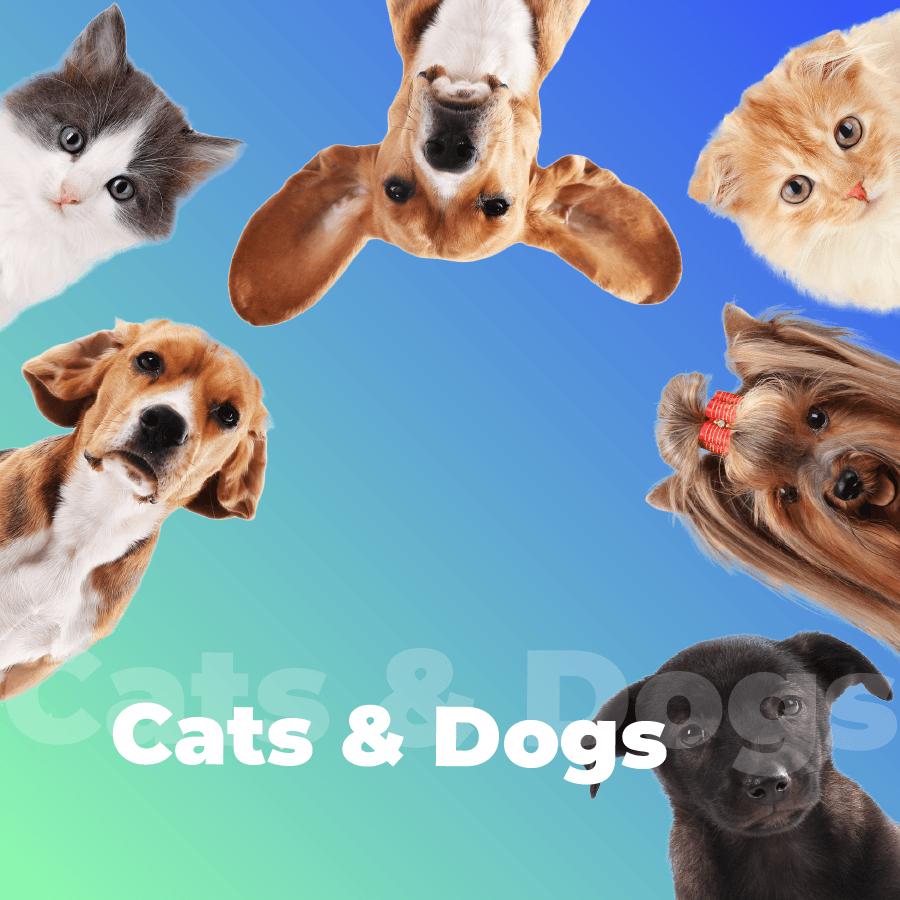 Станция Cats & Dogs на 101.ru